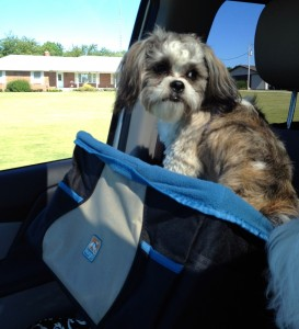 doggie car booster seat