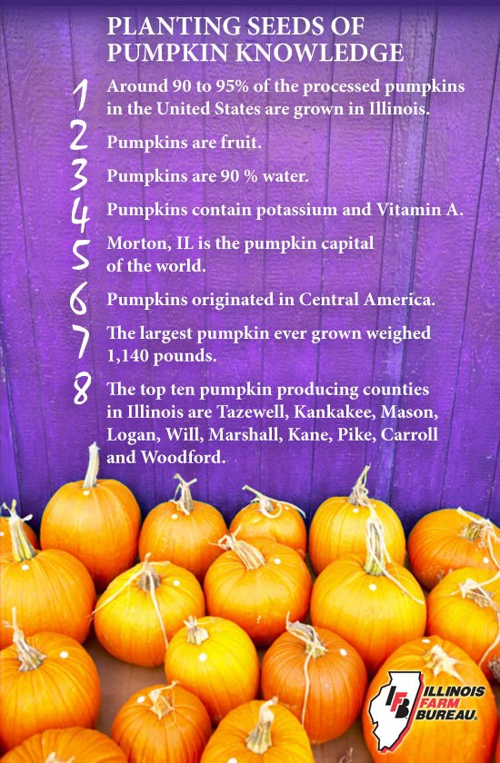 Pumpkin Puree Facts