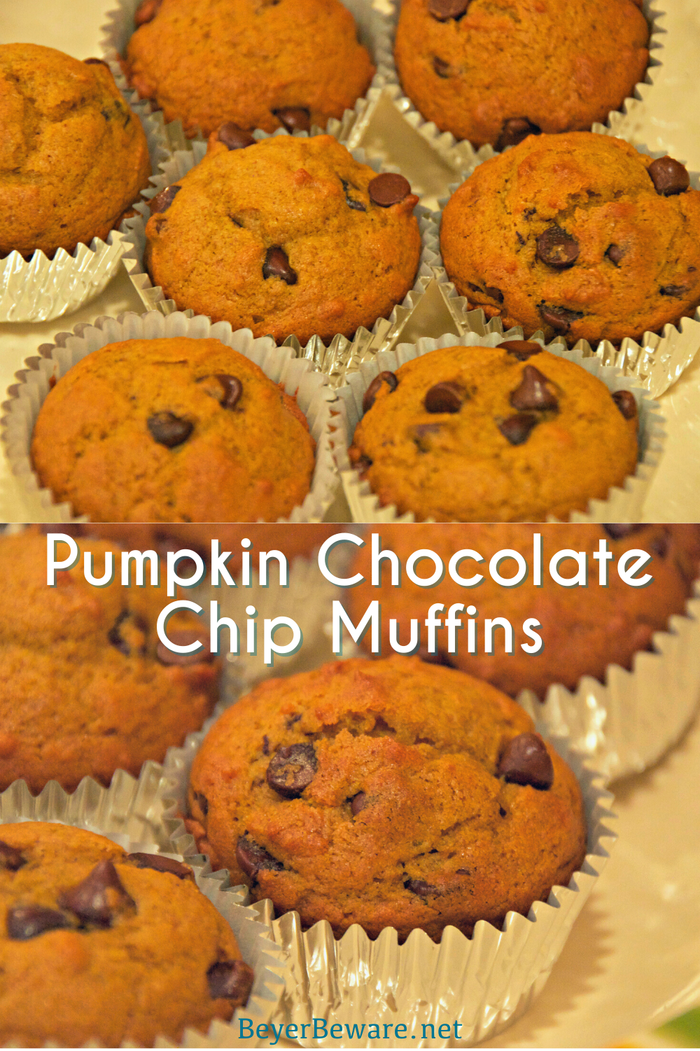 Pumpkin chocolate chip muffins are a staple of fall snacks and breakfast made from scratch with canned pumpkin and plenty of chocolate chips to make the kids feel like they aren't eating healthy food.