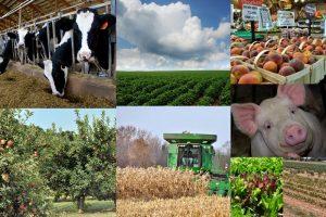 Day 1- Farmers Grow Whole Foods