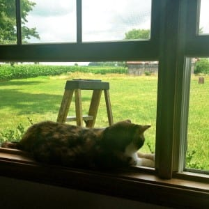 cat sitting in window