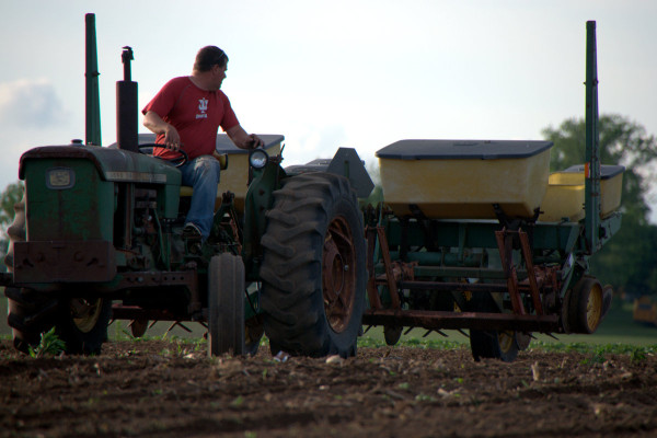 Sweet Corn Planting